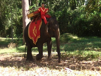 Riding an Elephant to Bakheng Mountain Cambodia