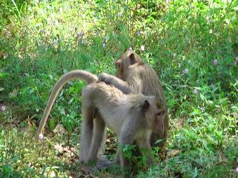Monkeys in Southeast Asia