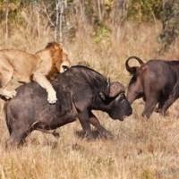Solo traveler tips wildlife adventure tour safety update 2016