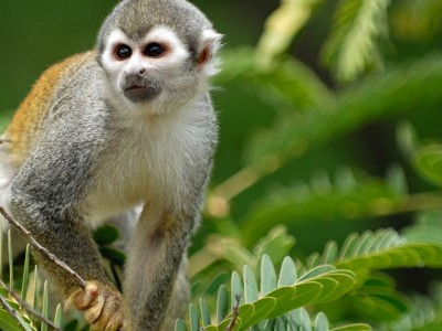 Brazilian Amazon Adventure exploring the rainforest upriver