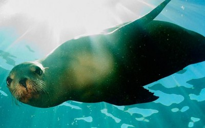 Galapagos Wildlife Adventure Cruise a great adventure for everyone