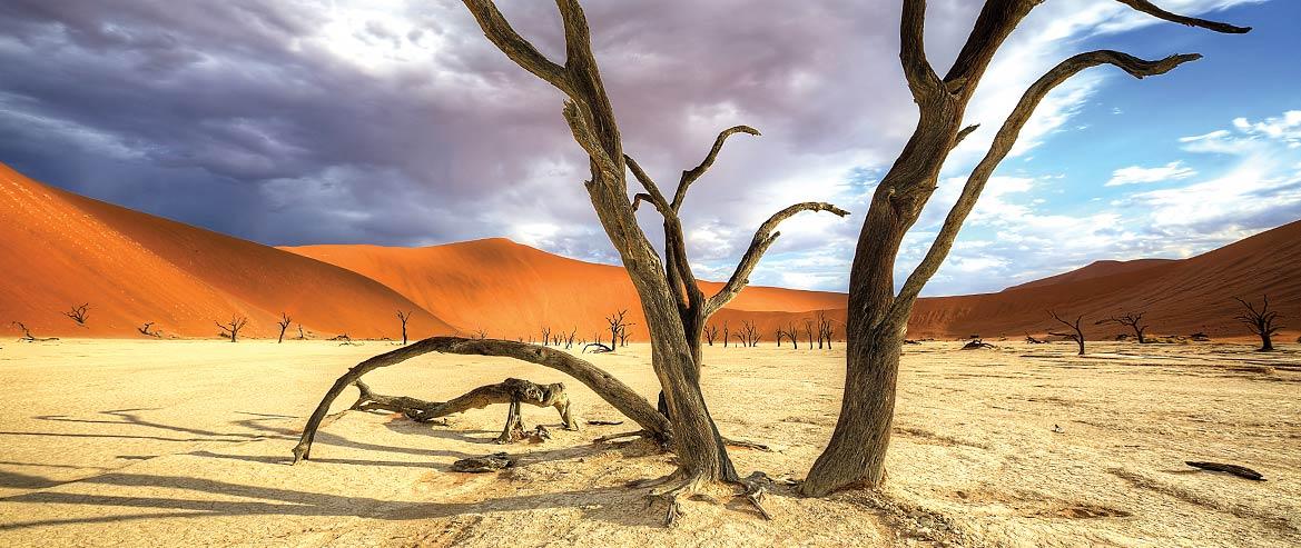 Solo Travel Destination Safari in Namibia