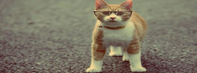 rsz_cat_with_glasses 940x350