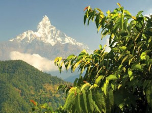 Solo Travel to Nepal and India