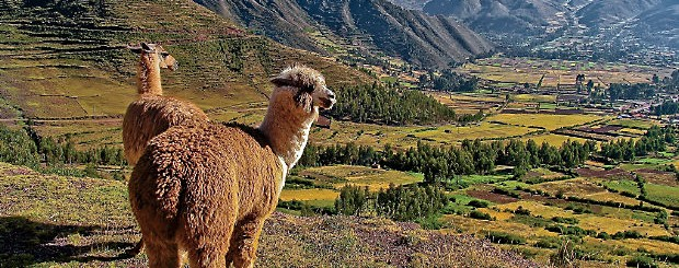 Solo travel deal for Peru no single supplement with early booking