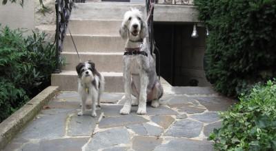 2_shaggy_dogs_website