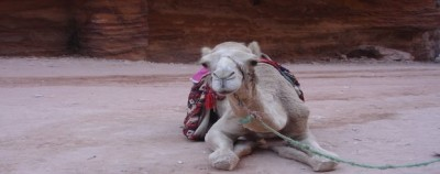 Traveling_africa_alone_camel
