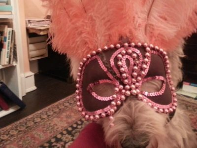 travel with your dog mardi gras