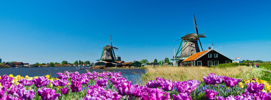 Top Solo Travel Deal No Single Supplement Dutch Tulip Time Cruise a Top Deal and Great Value