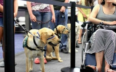Travel How to Act Around a Service Dog tips for interacting