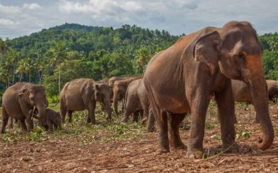 Sri Lanka Safari Wildlife and Ecotourism for an Adventure