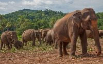 Sri Lanka Safari Wildlife and Ecotourism for an Adventure