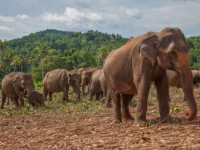 Adventure Vacation for Singles-Sri Lanka Safari Wildlife and Ecotourism for an Adventure