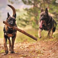 outdoor-activities-you-and-your-dog-should-tr