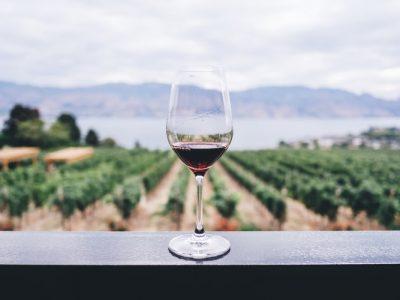 solo wine tasting adventure
