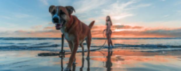 Dog-Friendly Travel Destinations