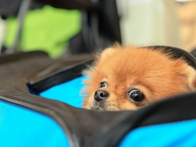 Solo Travel With Pets